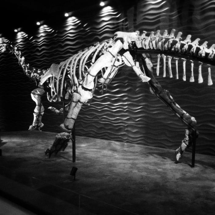 Динозавры в Гонконге