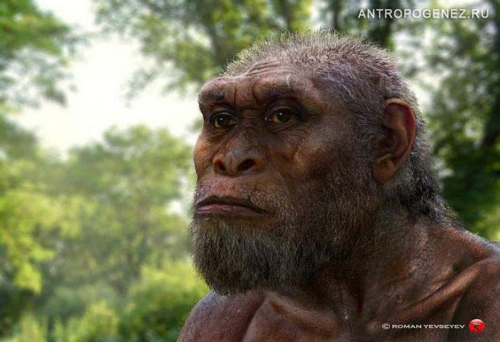Как выглядели древние гоминиды из Дманиси