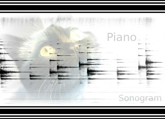 phonocat