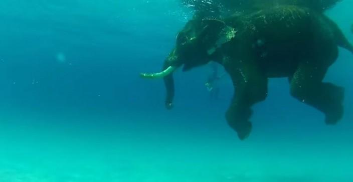 Последний плавающий слон
