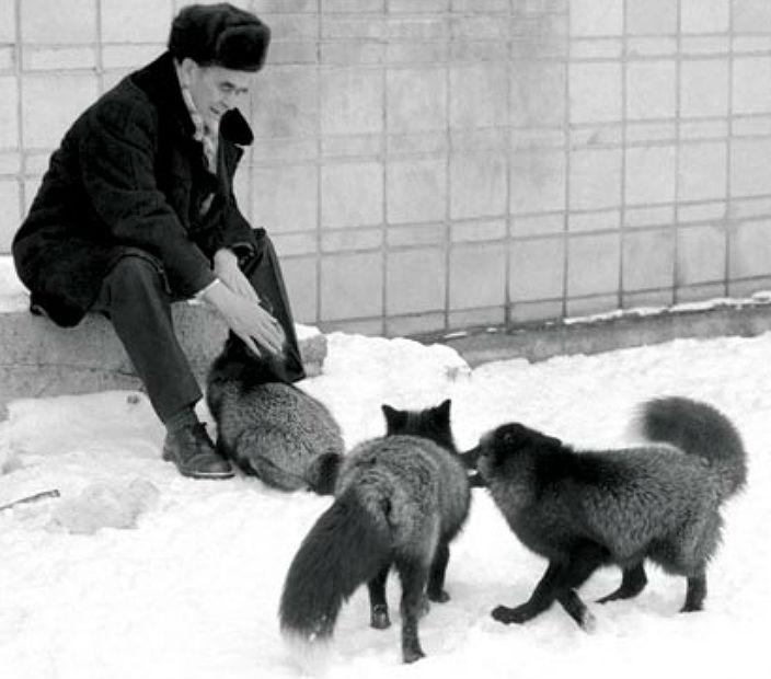 Дмитрий Беляев с лисами