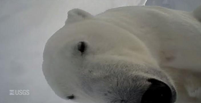 polarbearcamera