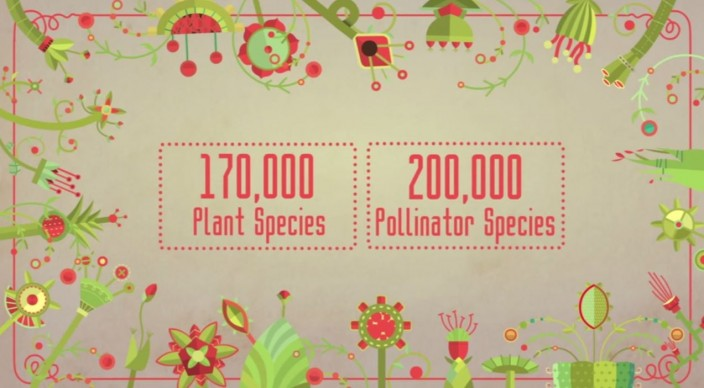 plantsbees