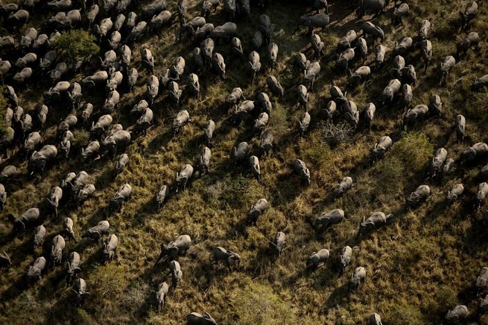 Последние слоны Африки